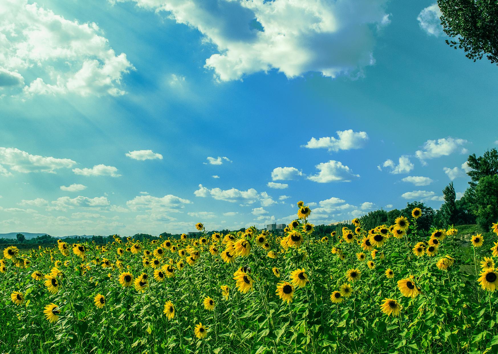 6 sposobów na zdrowe lato!